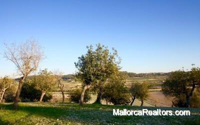 Grundstück mit bauen projekt in Mallorca